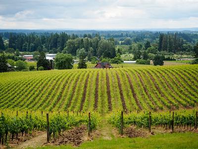 Sokol Blosser Winery in Oregon's Willamette Valley