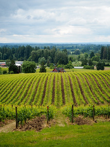 Sokol Blosser Winery in Oregon