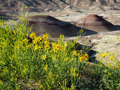 Wildflowers at the Painted Hills