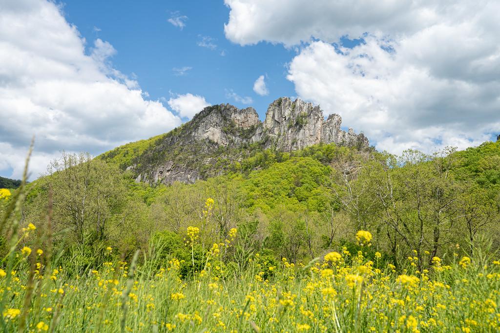 Seneca Rocks with wildflowers