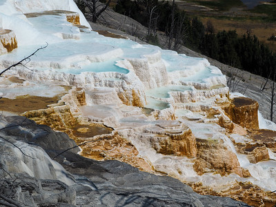 Canary Spring at Mammoth Hot Springs
