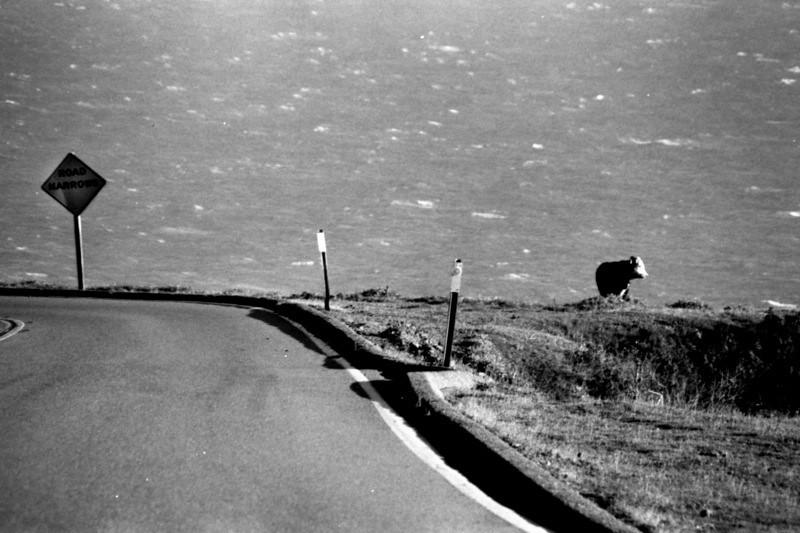 Happy California Cow - United States