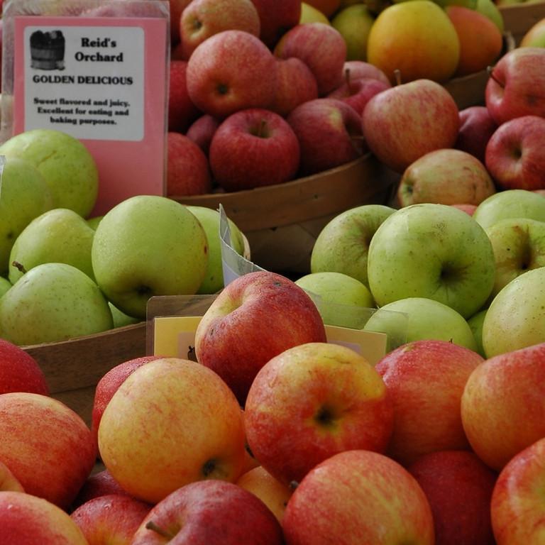 Apples - Nottaway Park, Virginia