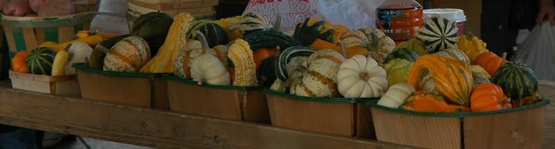 Gourds - Ann Arbor, Michigan