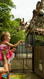 Look at Leia's expression as the Giraffe gratefully accepts her offering.