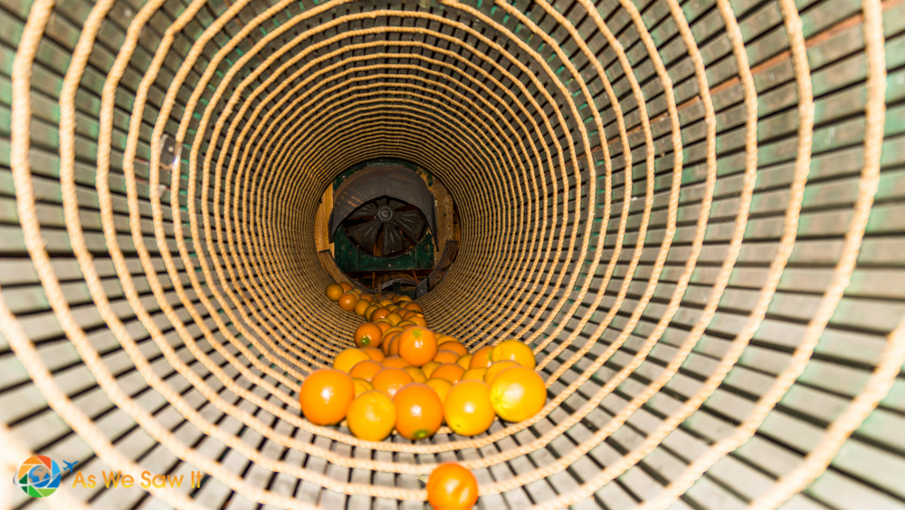 Next the oranges travel to the dryer, a slotted, spinning barrel that spirals them forward.