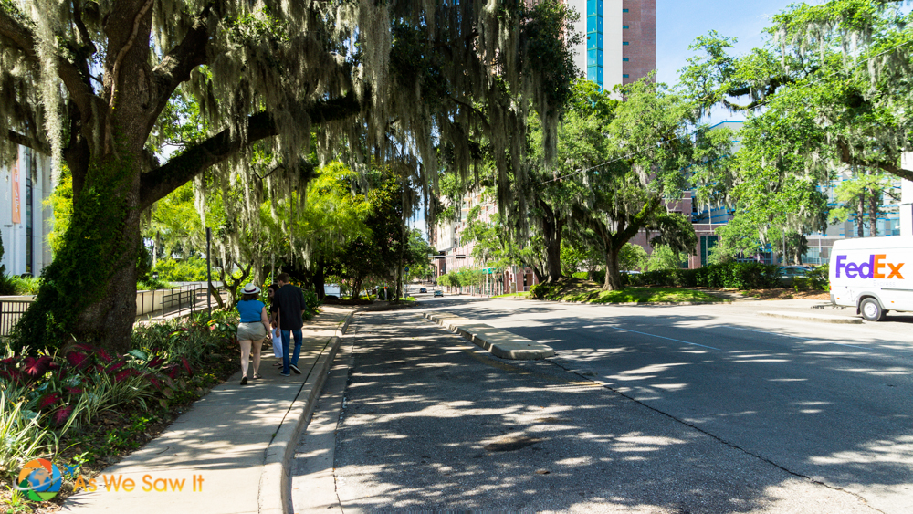 Moss covered trees line Bronough St. in front of the Florida History Museum