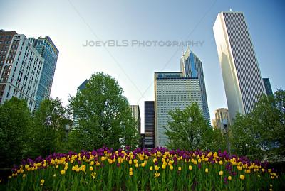 Spring in Chicago's Millennium Park