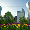 Spring in Chicago's Millennium Park