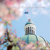 Spring Flowers at the Indiana State House in Indianapolis, Indiana