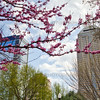Downtown Indianapolis, Indiana in the Spring