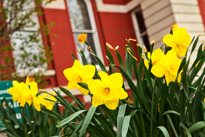 Spring Flowers on the Square in Downtown Crown Point, Indiana