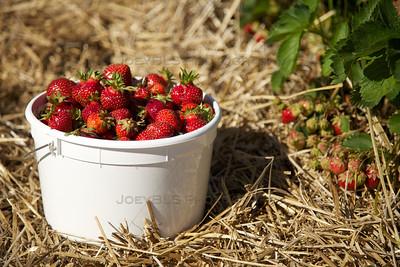 Strawberry Patch U-Pick