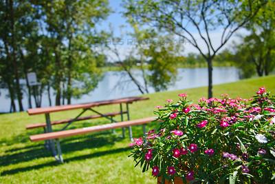 Flowers at Hidden Lake Park in Merrillville, Indiana