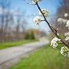 Schererville Bike Trail - Pennsy Greenway Bike Trail in the Spring
