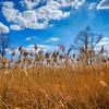 Wild Grasses in Schererville, Indiana