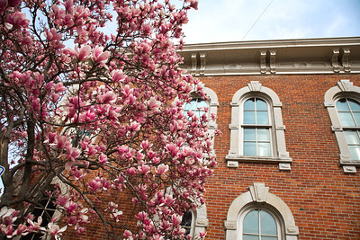 Porter County Museum Spring Magnolias