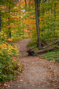 Empire Bluffs Trail in the Fall - Vertical