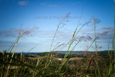 Dune Grass at Sleeping Bear Dunes with D H Day Farm