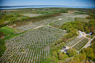 Blooming Cherry Orchards on Old Mission Peninsula near Traverse City, Michigan