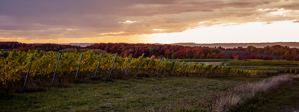 Sunset over a vineyard on Old Mission Peninsula near Traverse City, Michigan