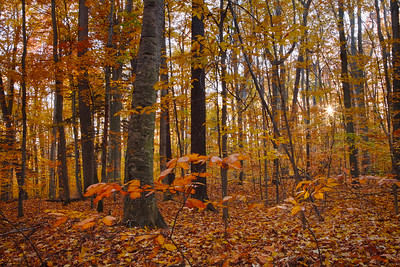 Fall Forests in Sleeping Bear Dunes State Park near Glen Arbor, Michigan