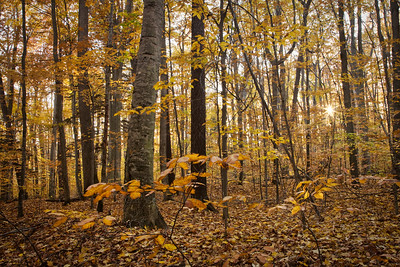 Fall Leaves in the Woods of Sleeping Bear Dunes State Park