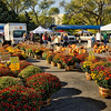 Mums at the Traverse City Farmers Market