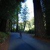 Great Cycling thru the forest of these tall redwoods
