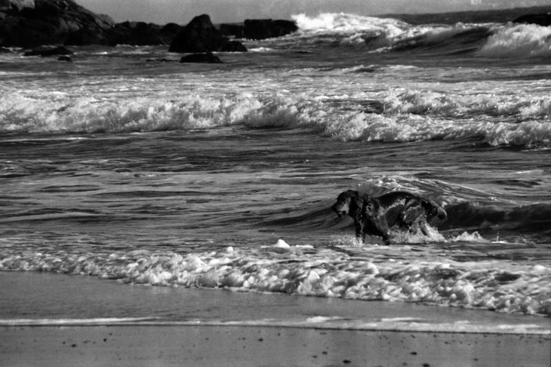 Dog on the Coast - California, USA