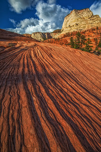 The Lines of Zion National Park