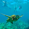 Swimming with Sea turtles in Maui