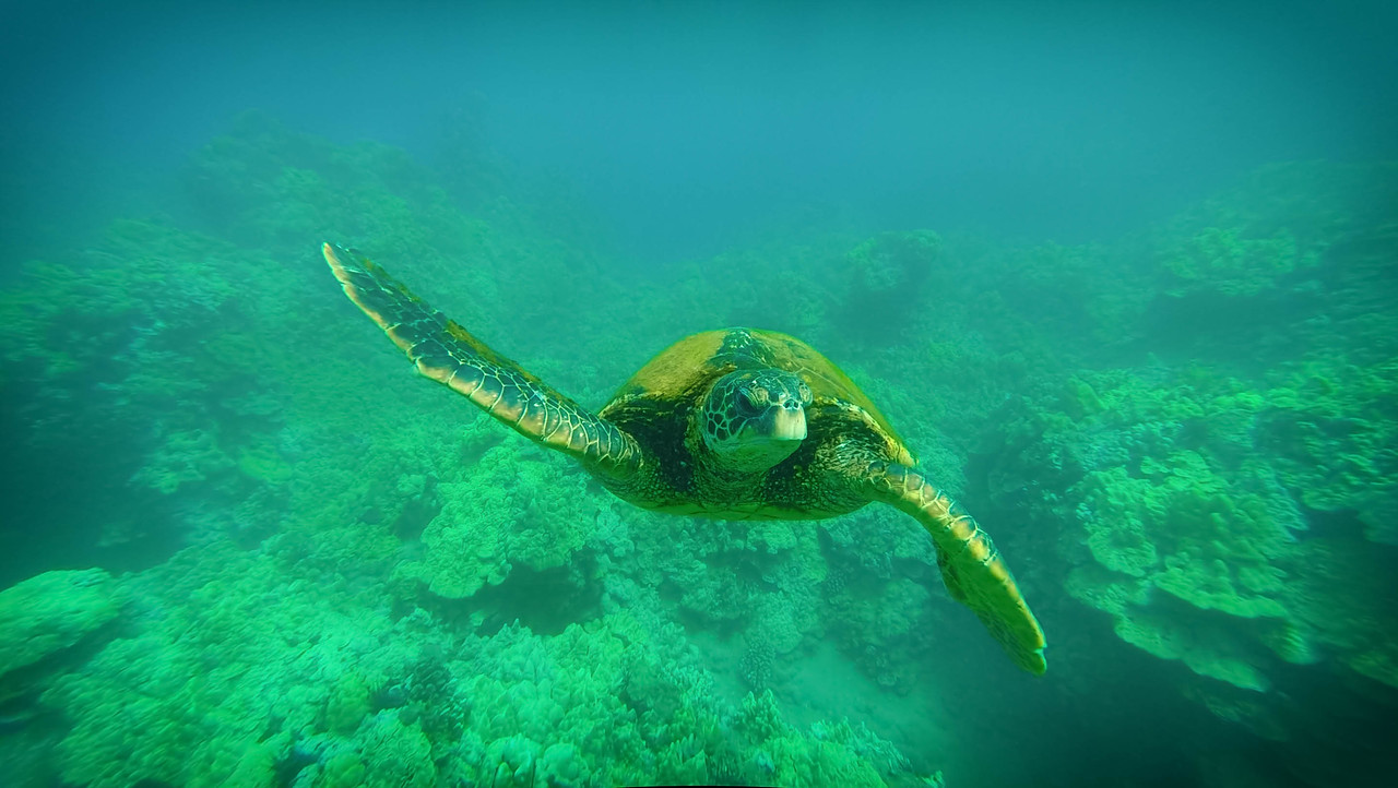 Beautiful Photos of 2015: Sea Turtles in Maui