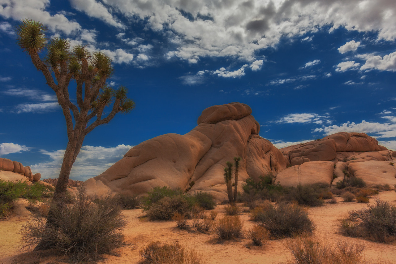 The stunning landscape of Joshua Tree National Park