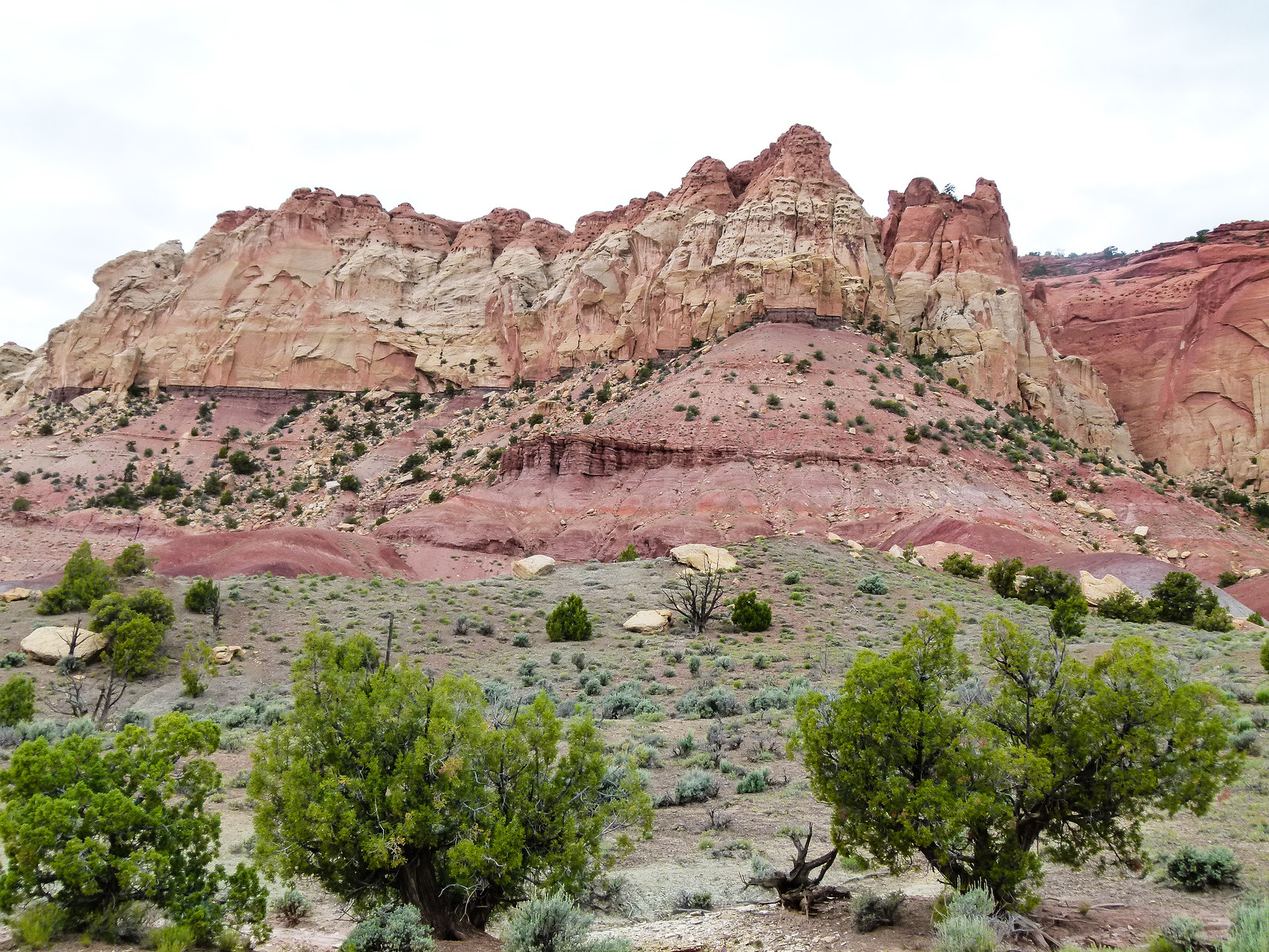 The rocks are pink, sage brush covers the ground and the trees are stunted in the high desert country on the Burr Trail.