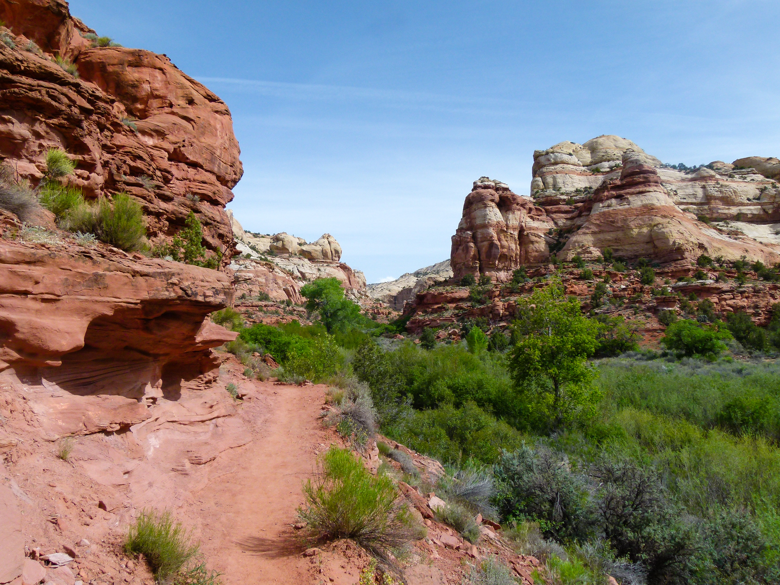 Hiking to Lower Calf Creek Falls is one of our favorite fun places to go in southern Utah.