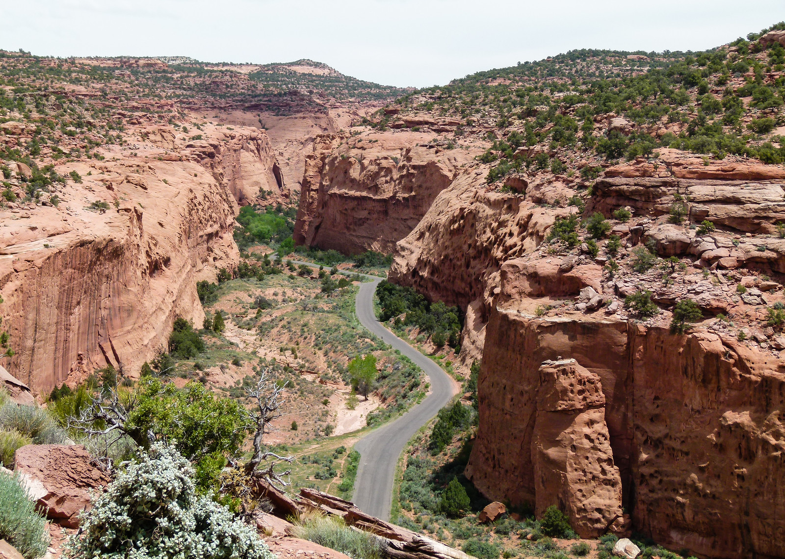 The gray pavement of Burr Trail travels through the pink walls of Long Canyon on a scenic drive in southern Utah.
