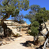 On the trail at Natural Bridges