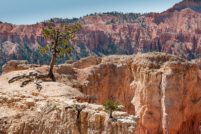 Solitary tree on top of Bryce Canyon in Utah