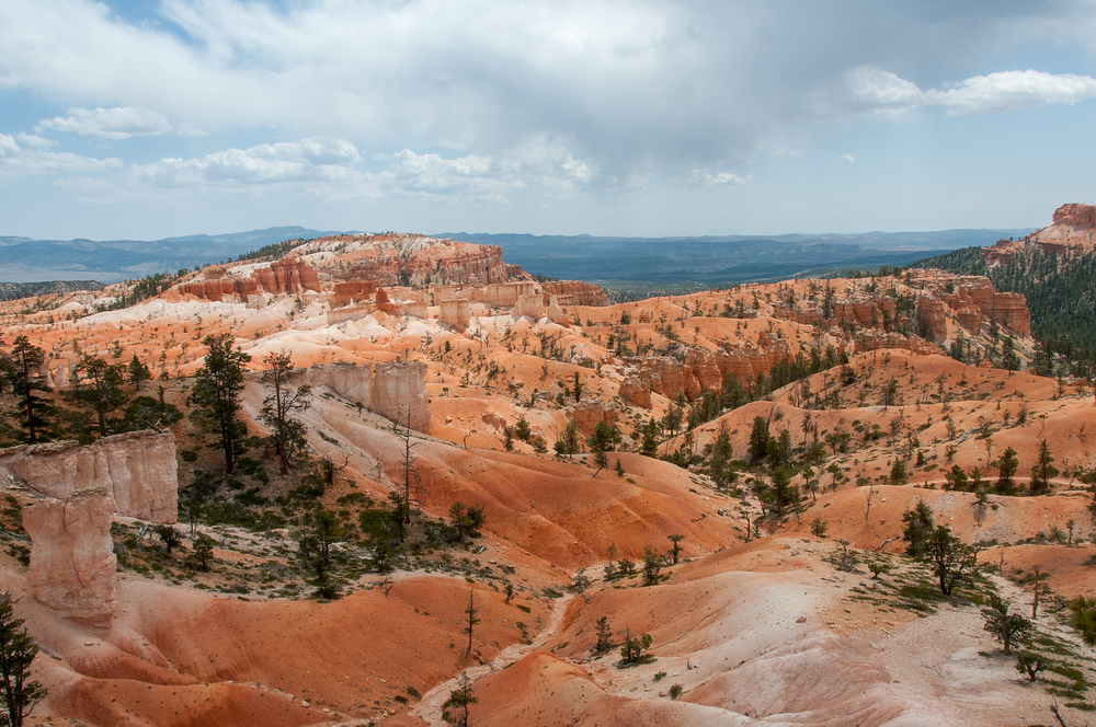 Dry Creekbed in Bryce Canyon National Park in Utah