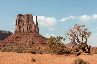 Dead branch near West Mitten Butte in Monument Valley