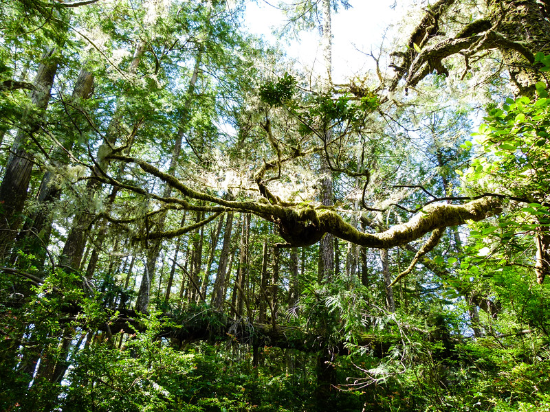 Boomer travel - Canada. While walking the Wild Pacific Trail, the forest is just as beautiful as the coastline. It's a fun boomer travel experience in Ucluelet, B.C.