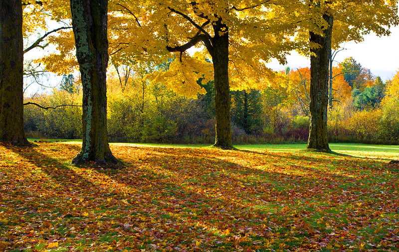 Fall, Vermont, USA
