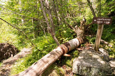 This was a side trail to a rock formation called Cantilever Rock. We didn't take the trail. I wouldn't have mind going, but not being in the best shape, we wanted to make it up and down the mountain before dark :p lol
