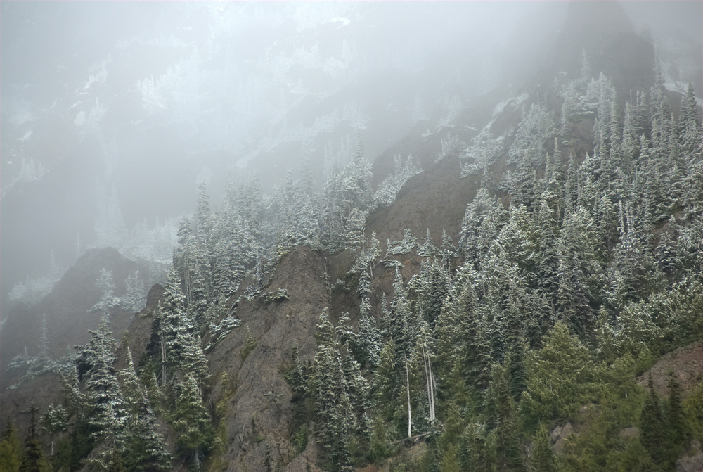 Snow on trees in Olympic National Park, Washington