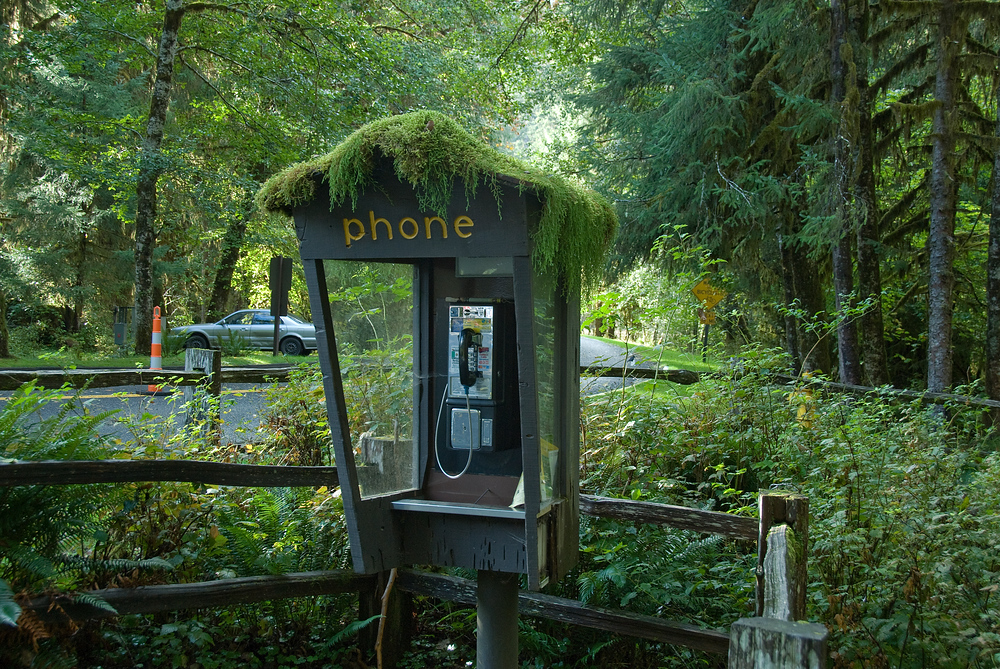 Moss covered phone booth, Olympic National Park