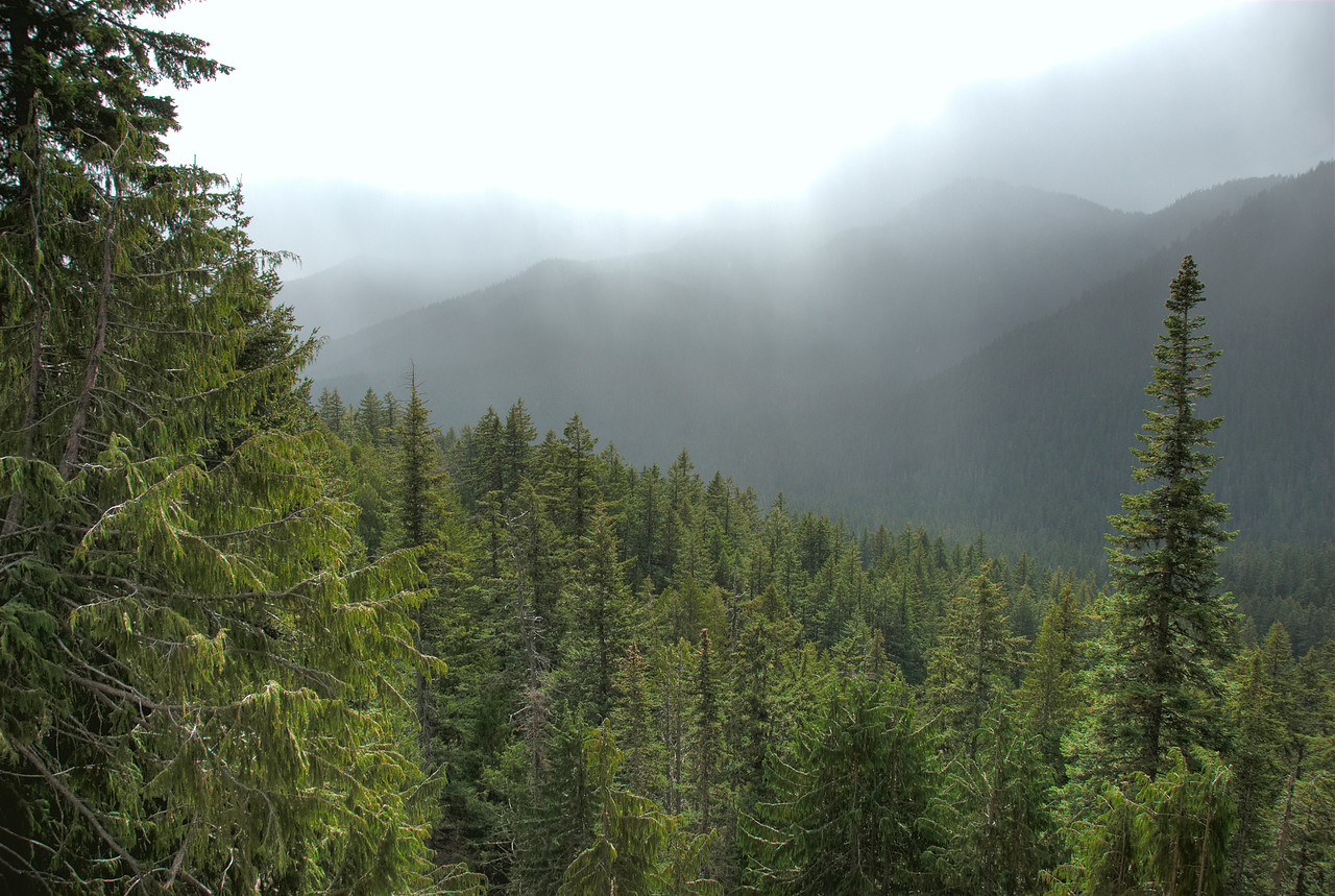 Mist over the Bailey Range in Olympic National Park, Washington