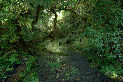 Inside the forest in Olympic National Park, Washington