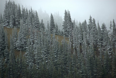 Snow-covered trees in Olympic National Park, Washington