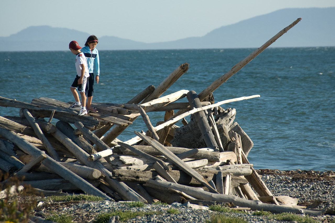 Stockpile of driftwood on a beach in Point Roberts, Washington